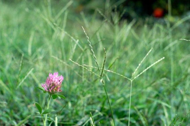 weeds-01